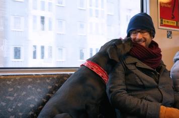 Perro haciendo amigos